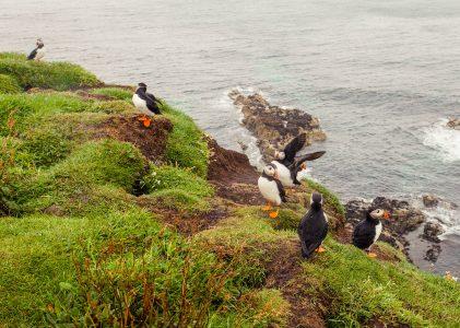 'Island Hopping' – Iona, Staffa and the Treshnish Isles