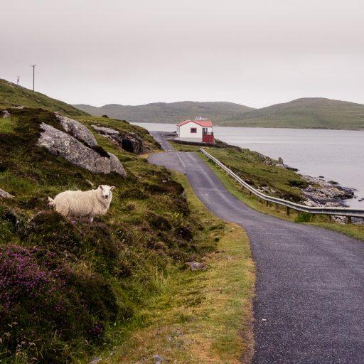 A breath of Scottish fresh air